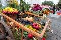 Сезон сельскохозяйственных ярмарок продолжается в Могилёве