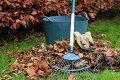 Субботник: убирать листву и высаживать деревья в Могилёве будут 28 октября