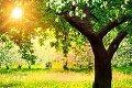 Могилёвский горисполком выдал разрешение на удаление объектов растительного мира