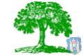 В Могилёве вырежут 3 тыс. 24 дерева и 74,04 га дикорастущего кустарника